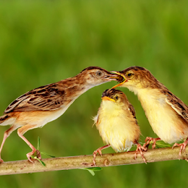 A Small Breakfast by Roy Husada - Animals Birds