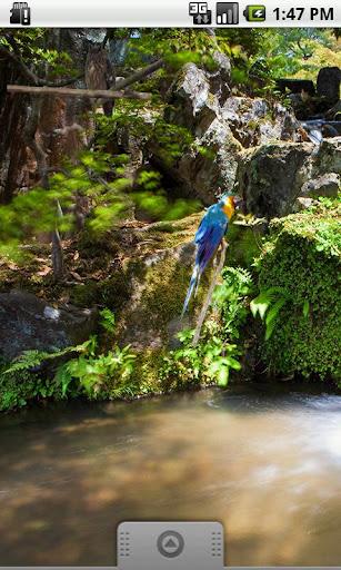 Parrot Blue Sticker