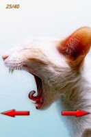 Screenshot of Funny Cats Pictures 2