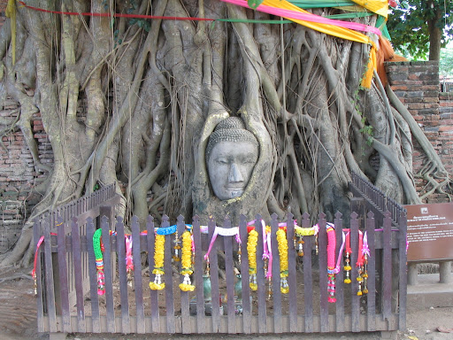 Budda w drzewie