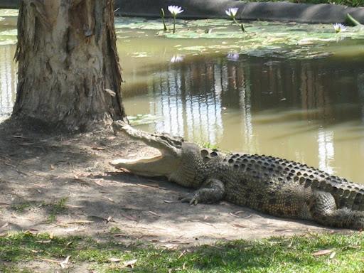 Steve Irwin Zoo - Kroki Show