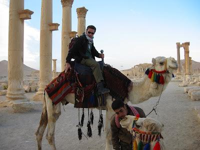 Bliski Wschód jak to Bliski Wschód - wielbłądy
