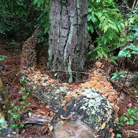 by Jennette Tyler Peek - Nature Up Close Mushrooms & Fungi