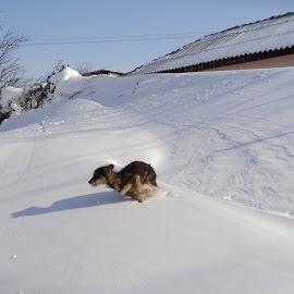 by Adrian Zorzolan - Animals - Dogs Running