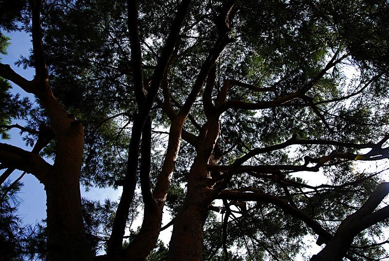 Shizen Kyoiku Park tree and sky 02