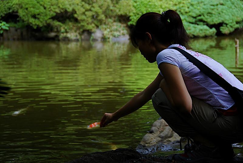 Aya feeds coy a pine needle in Shizen Kyoiku Park