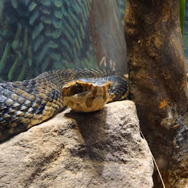 Snake by Danette Neely - Animals Reptiles ( snake, reptile )