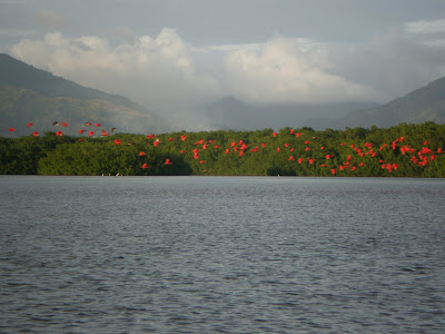 Red Parrots in Trinidad