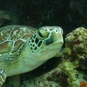 Sea turtle from David.jpg
