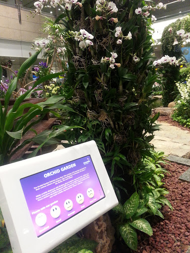 Orchid Garden At Changi Airport T2