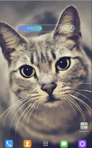 кошки обои на айфон № 58345 загрузить