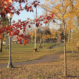 by Dawn Price - City,  Street & Park  City Parks (  )