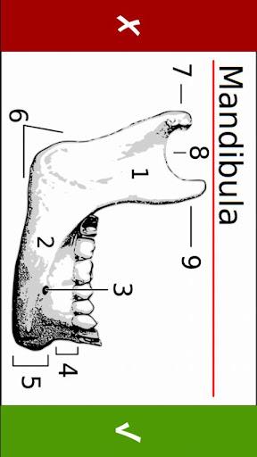 Torb's Anatomy