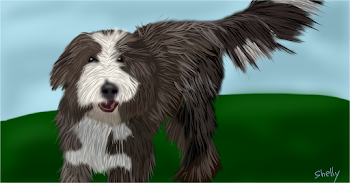 Lincoln: My Bearded Collie