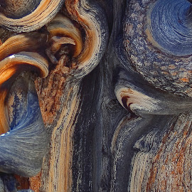 Gnarled by Patrick Flood - Nature Up Close Trees & Bushes ( canon, highway 395, photosbyflood, bristle cone pine, california, state park, independence, oldest living things, white mountains, close up )