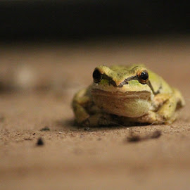 by T Mullaly - Animals Amphibians (  )