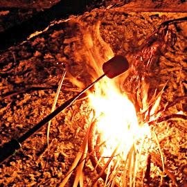 MARSHMELLOW ON THE BON FIRE by Cheryl Beaudoin - Abstract Fire & Fireworks ( winter, autumn, outdoors, bon fire, warmth, night, fun, roast, toast, fire, marshmellow,  )