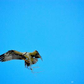 by Rob Kovacs - Novices Only Wildlife ( , bird, fly, flight )