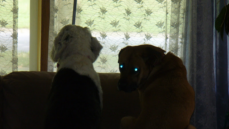 Monster looks out the window while MaiTai shows that she's possessed.