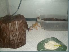 Gecko no2 1