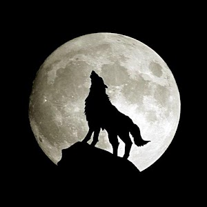 App Wolf wallpaper APK for Windows Phone Android games and apps