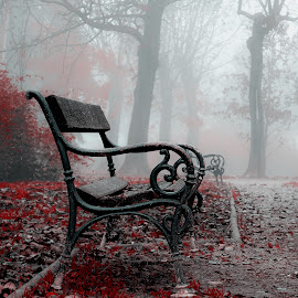 The Bench by Manuela Dedić - Artistic Objects Furniture ( park, bench, fog, furniture, mist,  )
