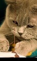 Screenshot of So Cute Cat Live Wallpaper