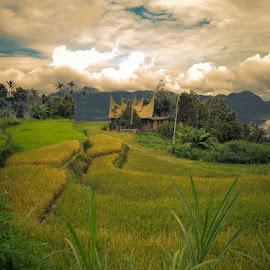 maninjau by Anton N Munasti - Landscapes Mountains & Hills