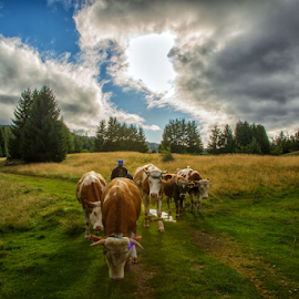 In front of the rain clouds by Stanislav Horacek - Landscapes Prairies, Meadows & Fields
