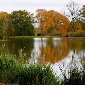 Autumn Reflections by Chrissie Barrow - Landscapes Waterscapes ( water, orange, reflection, grass, autumn, green, trees, lake,  )