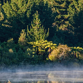 Morning mist by Vibeke Friis - Nature Up Close Water ( morning light, trees, lake, mist,  )