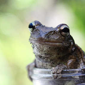 Smiling Frog by Blake Coln - Animals Amphibians ( frog, happy, jar, smile, animal )