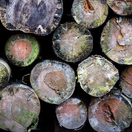 Wood trunks by Steen Rasmussen - Nature Up Close Other Natural Objects ( steenr.dk, fungis, steenr.com, wood, rasmussen, trunks, steen, photography, steenr )