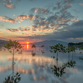 The Mangroves @ Triboa by Julius Santos - Landscapes Travel ( days end, triboa, peaceful, mangroves, sunset )