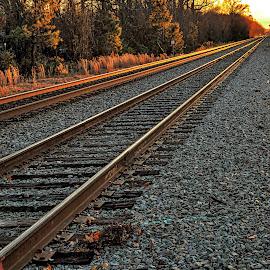 Golden  by Lou Plummer - Transportation Railway Tracks