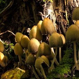 Congregation by Darrell Evans - Nature Up Close Mushrooms & Fungi ( fungi, tree, wood, moss, leaves )