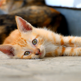 by Martin Marthadinata - Animals - Cats Kittens