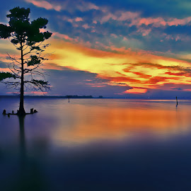 Lone Tree at Sunrise by James Gramm - Landscapes Sunsets & Sunrises ( water, sky, tree, colors, long exposure, lone, river )
