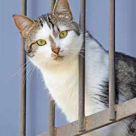 Incognito by Mia Ikonen - Animals - Cats Portraits ( curious, alert, focused, finland, balcony,  )