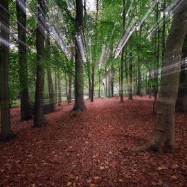 by Steven Put - Landscapes Forests