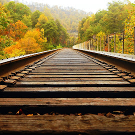 Laying Low by Stephanie Turner - Transportation Railway Tracks ( train tracks, railroad tracks, architectural detail, travel, transportation )