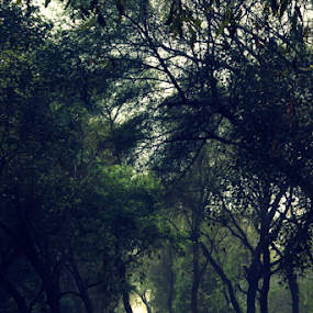 New Way by Jatin Malhotra - Nature Up Close Trees & Bushes ( calm, green, way, forest, alone )