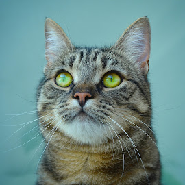 luna by Almasa Dalan - Animals - Cats Portraits
