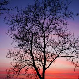 by Sanja Dedić - Nature Up Close Trees & Bushes