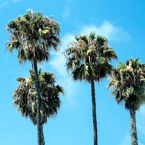 That Palm Life  by Denver Pratt - Nature Up Close Trees & Bushes (  )