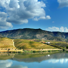 Port Wine Vineyard by Antonio Amen - Landscapes Mountains & Hills ( clouds, port wine, vineyard, river douro, douro )