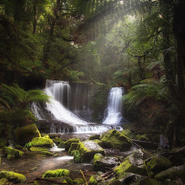 Tranquil Tasmania  by Steve Brooks - Landscapes Forests ( water, canon, tasmania, visit australia, green, australia, waterfall, moss, rain forest, forest, ferns, see australia )