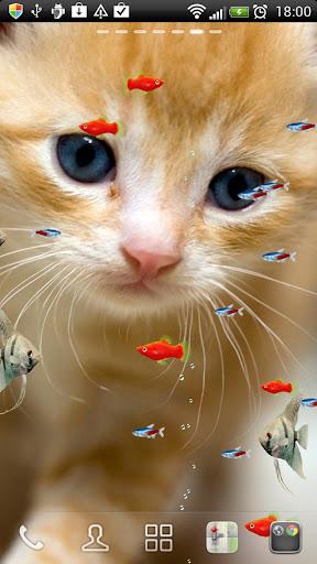 淡水熱帯魚たちと子猫★LIVE壁紙