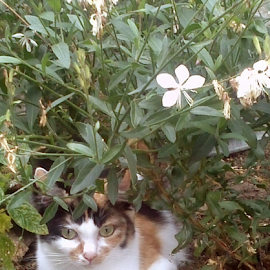 Hiding in the flowers by Lyz Amer - Animals - Cats Portraits ( cat )