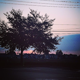 by Lori Broussard - Instagram & Mobile Instagram ( sumrise, dawn, morning, tree, trees, myphotography, canon, Colorskeepmehappy, city, houston, htown )